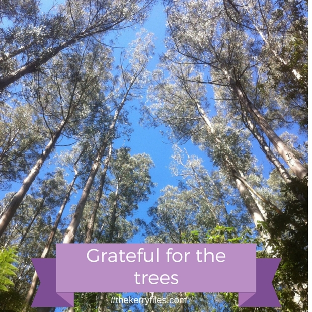 Grateful for the trees.jpg